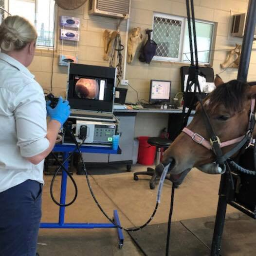 Equine Endoscopy
